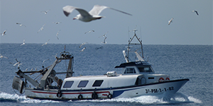 Seabirds flocking toward a fishing boat